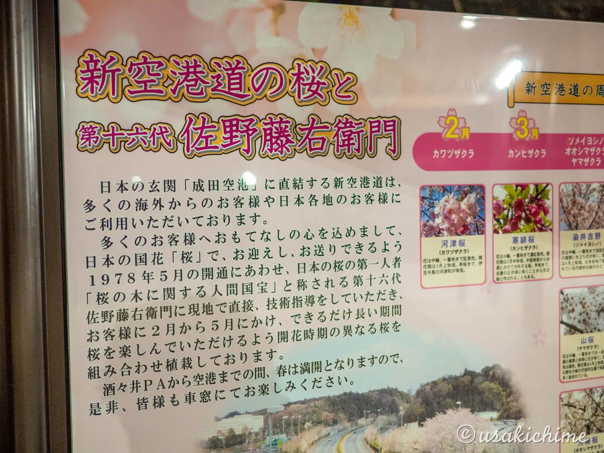 新空港道の桜と第十六代 佐野藤右衛門(さのとうえもん)